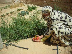 2008 - Jardin de famille en plein désert du Sahara, la voie directe vers l'autosuffisance alimentaire