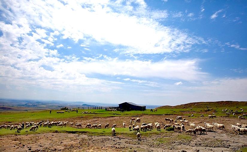 Lesotho: La FAO et l'UE assistent desagriculteurs