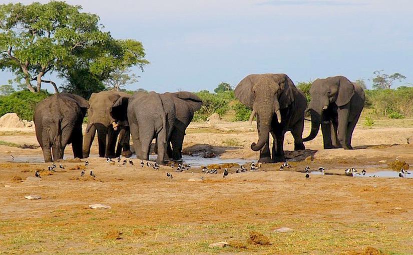 http://pixabay.com/static/uploads/photo/2013/02/17/10/12/elephants-82473_640.jpg