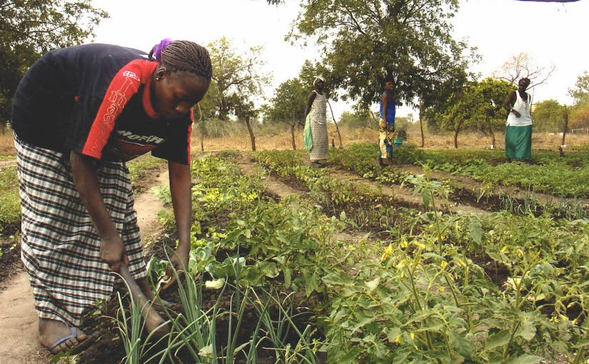 Les futures fermes auSénégal