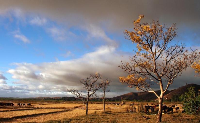 La sécheresse la plus grave depuis six ans auMadagascar
