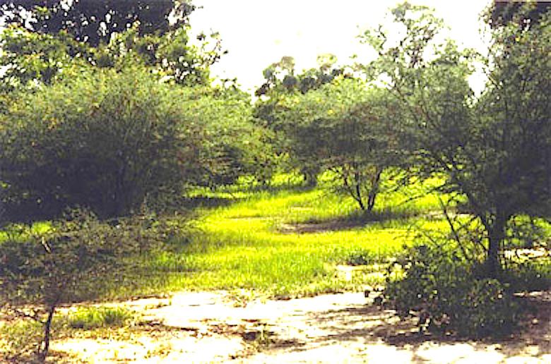 Populations locales et reboisement au BurkinaFaso