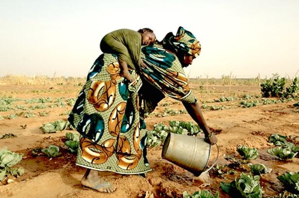 Agriculture familaile au Mali - http://4.bp.blogspot.com/_9oEg40C6DmI/TNA8UDU07DI/AAAAAAAALZc/m2hW-z_-tL4/s1600/29648.jpg