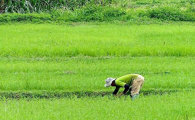 La Thaïlande actuellement en proie à lasécheresse