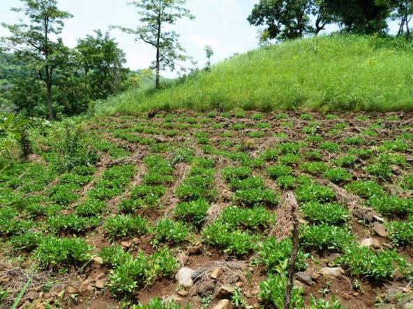Kara et le pays Kabyé - agriculture - https://volontariatosi.files.wordpress.com/2013/09/kara-et-le-pays-kabyc3a8-9-agriculture-en-terrasse.jpg
