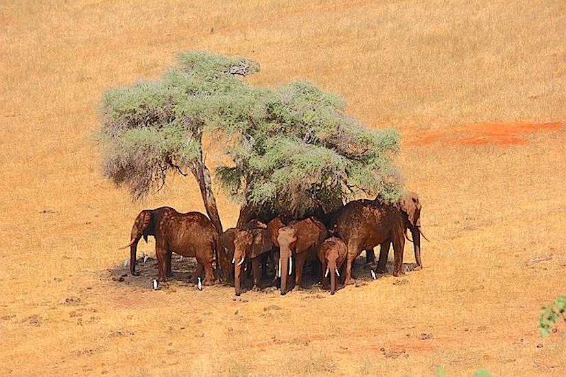 Conflits dans les territoires sauvages duKenya