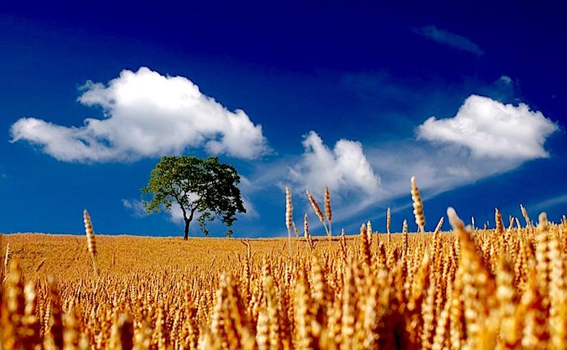 http://pixabay.com/static/uploads/photo/2013/10/07/18/06/summer-192179_640.jpg